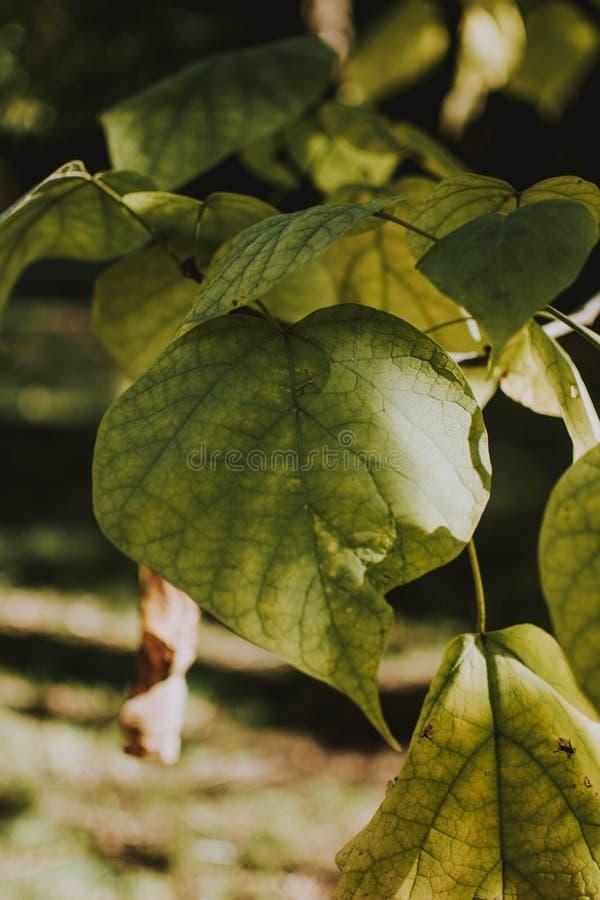 Tiro vertical do close up das folhas verdes em um dia ensolarado com fundo natural borrado fotografia de stock