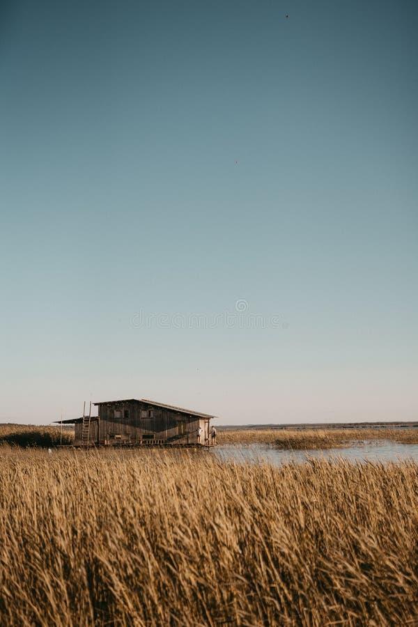 Tiro vertical hermoso de un campo de trigo grande con un pequeño granero de madera en el centro imagen de archivo libre de regalías