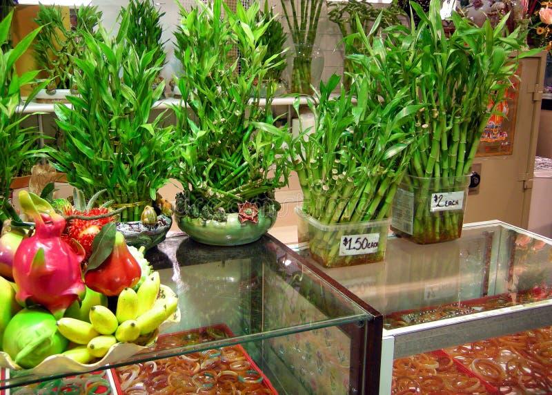 Tiros de bambu imagens de stock