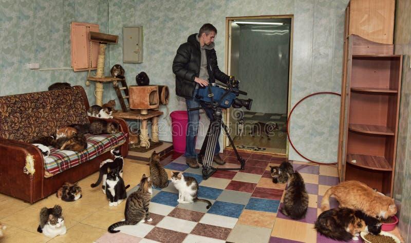 Tiros de Videographer para a televisão no abrigo do gato imagens de stock royalty free