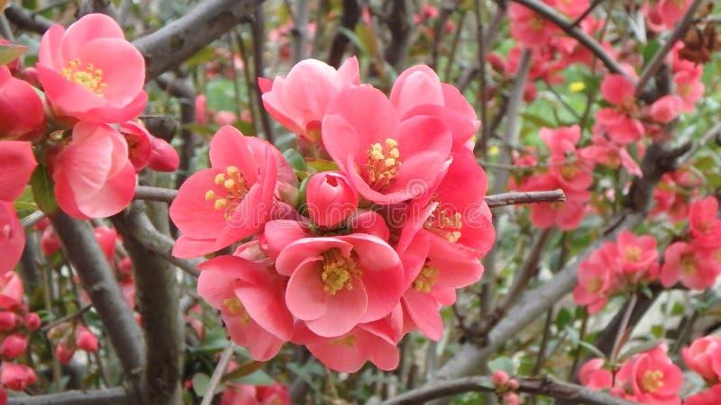 Tiros macros: mi jardín fotos de archivo
