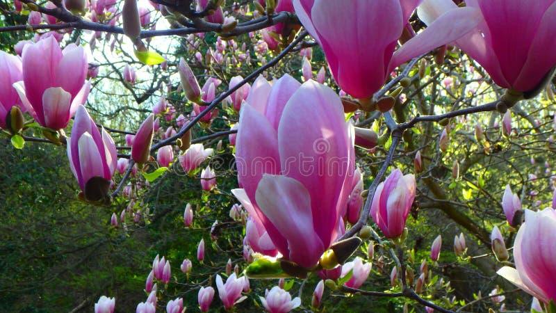 Tiros macros: mi jardín fotografía de archivo libre de regalías