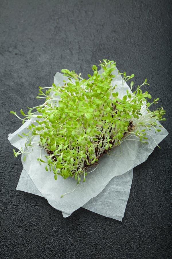 Tiros verdes frescos do verde do micro em um fundo preto fotografia de stock royalty free