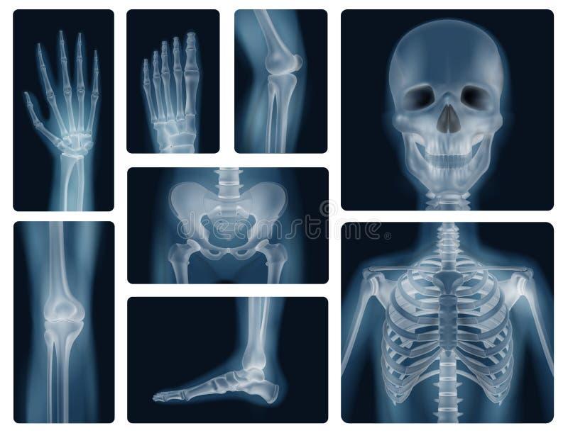 Tirs réalistes de rayon X d'os humains illustration libre de droits