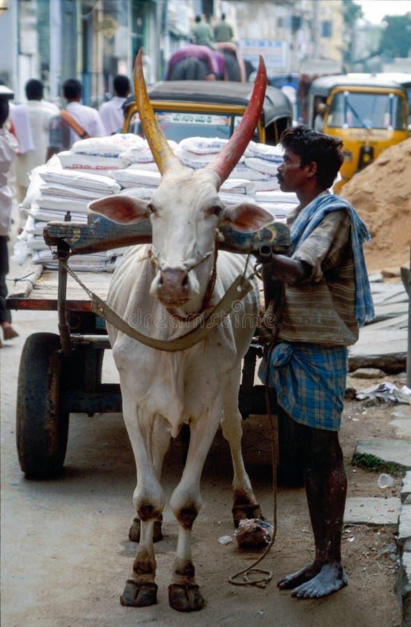 Tirupathi,安得拉邦,印度:使用运输的牛车的身份不明的人担子 图库摄影