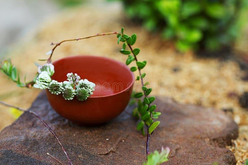 Tisana con il ramo del mirtillo rosso e del trifoglio bianco fotografia stock