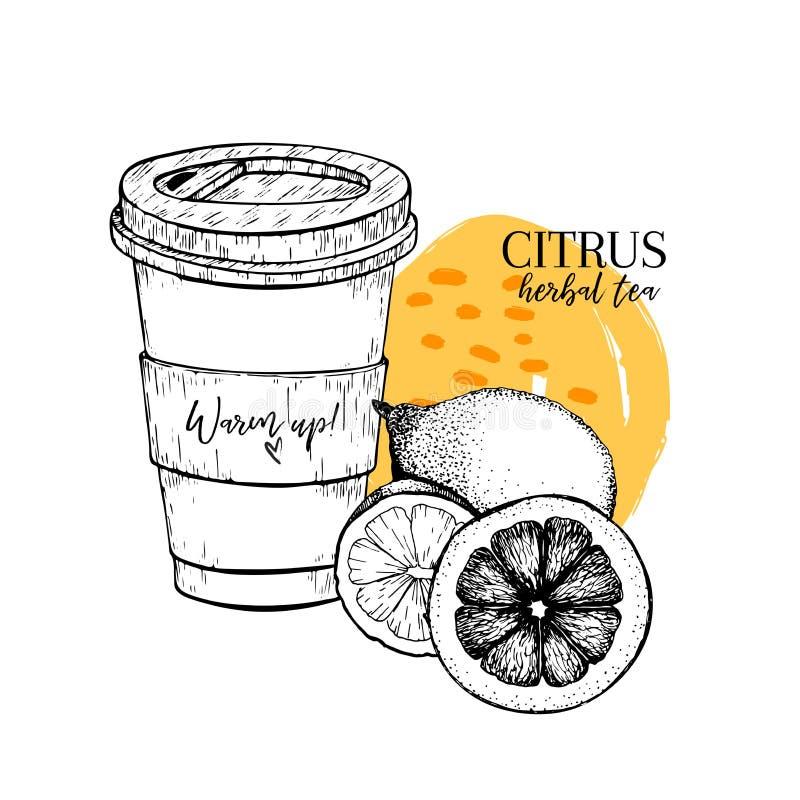 Tisane tirée par la main d'agrume à aller Tasse, citron et orange de thé Vectror a gravé l'art Thé chaud curatif dans la tasse de illustration libre de droits
