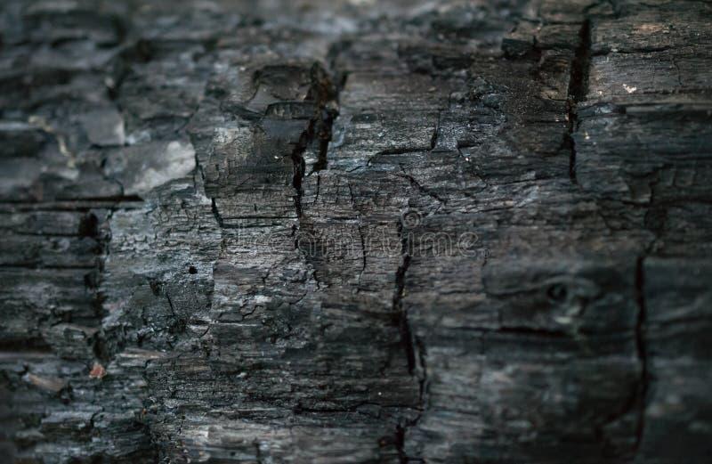 Tison de charbon par morceau de bois carbonisé images libres de droits