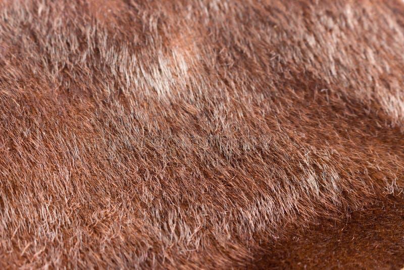 Tissu brun foncé de textures de fourrure de faux Fermez-vous vers le haut de la pleine vue photographie stock
