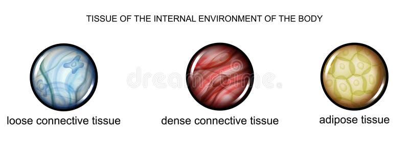Tissu de l'environnement interne du corps illustration libre de droits