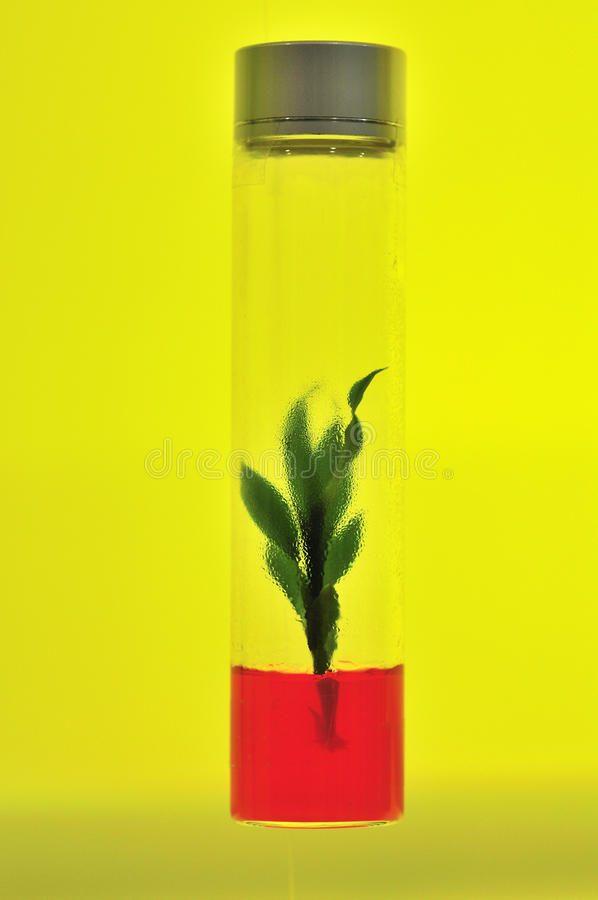Download Tissue Culture Stock Images - Image: 12209844