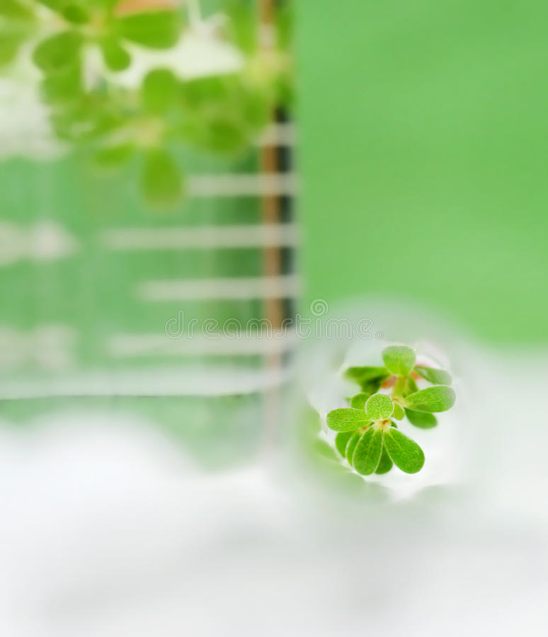 Tissue culture concept. Portrait by small plant in test tubes stock images