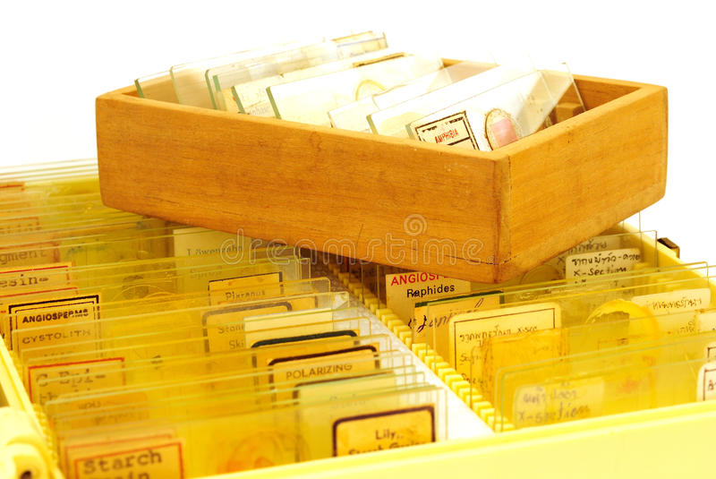 Tissue samples on a slide in a box stock image
