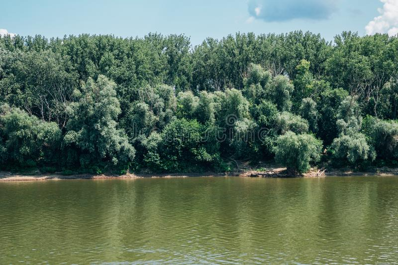 Tisza River och gröna träd i Szeged, Ungern royaltyfria bilder