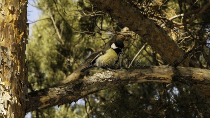 tit Een vogel op een tak stock foto