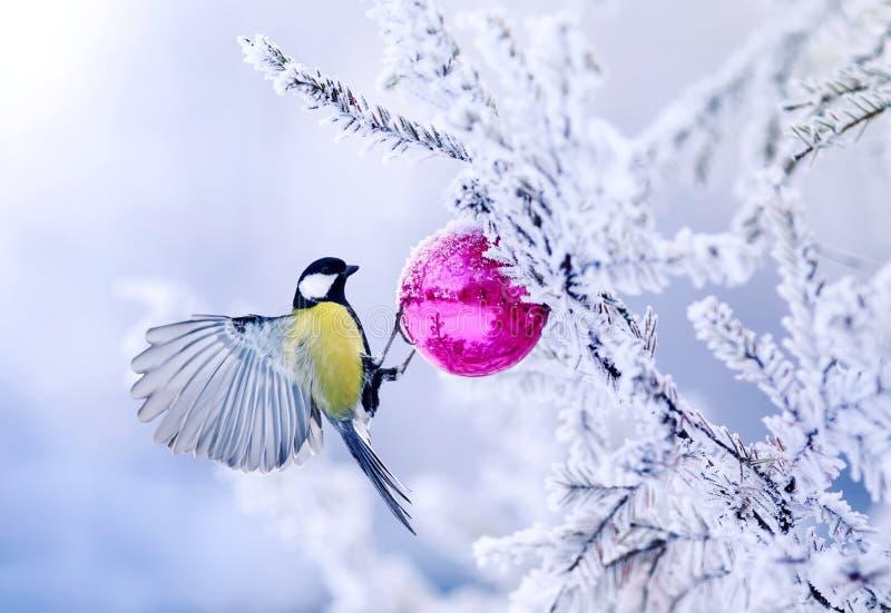 Tit hermoso del pájaro de la tarjeta de Navidad en una rama de un spruc festivo fotografía de archivo libre de regalías