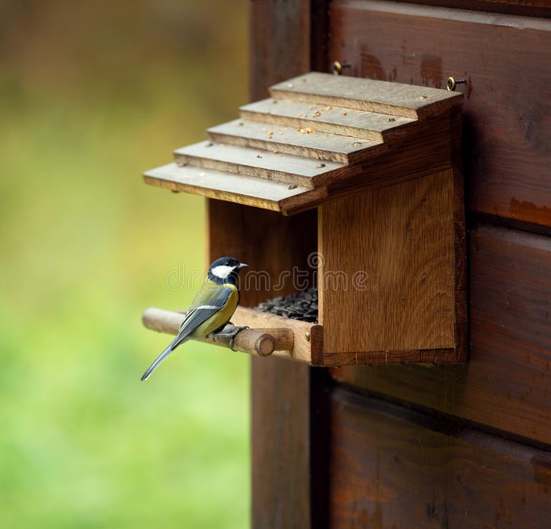 Tit sits on a feeding trough. Tit sits on a wooden feeding trough stock images