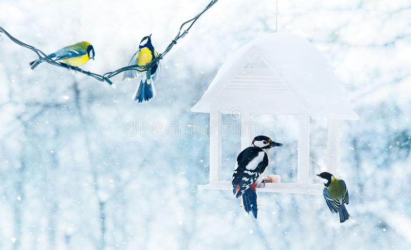 Tit and woodpecker birds in white wooden. Feeder winter snowy frosty day on nature stock photo