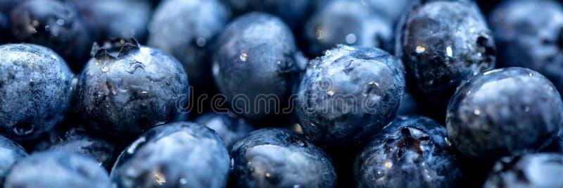 Titelrad med nya rå blåbär med waterdrops royaltyfria foton