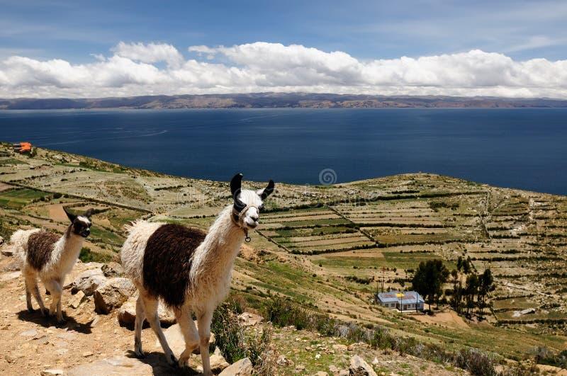 titicaca för solenoid för bolivia del isla lakeliggande royaltyfri bild