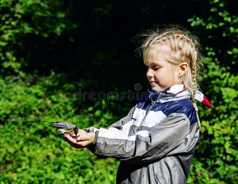Titmouse питания маленькой девочки стоковое изображение rf