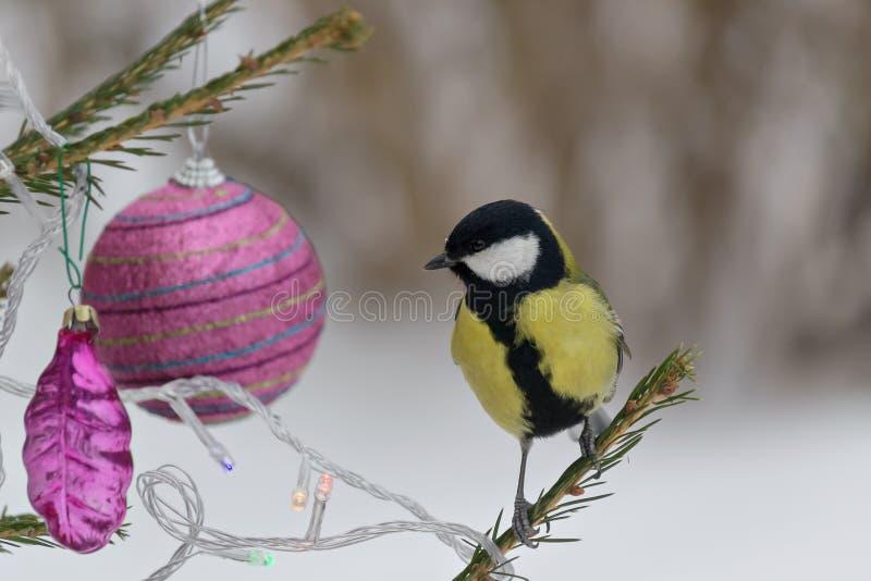 Titmouse сидя на ветви спруса, украшенной для рождества стоковое фото