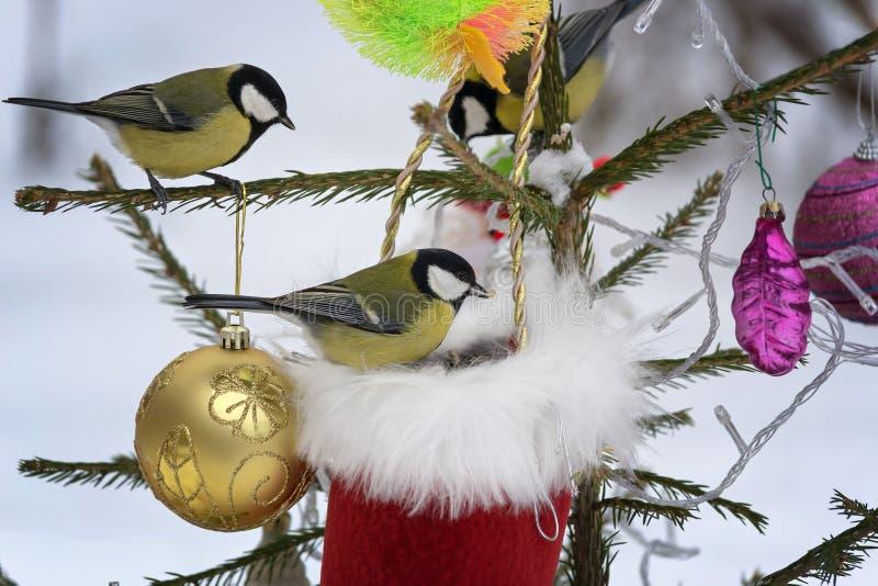 Titmouse сидя на ветвях спруса украшенных для рождества стоковая фотография rf