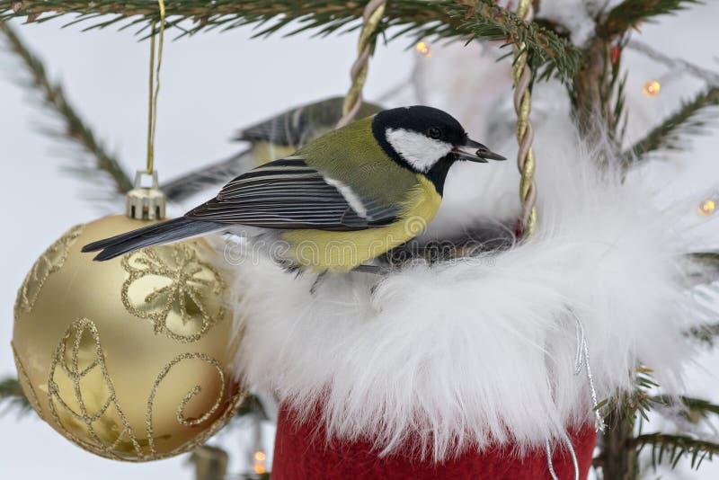 Titmouse сидя на украшенной рождественской елке стоковые изображения