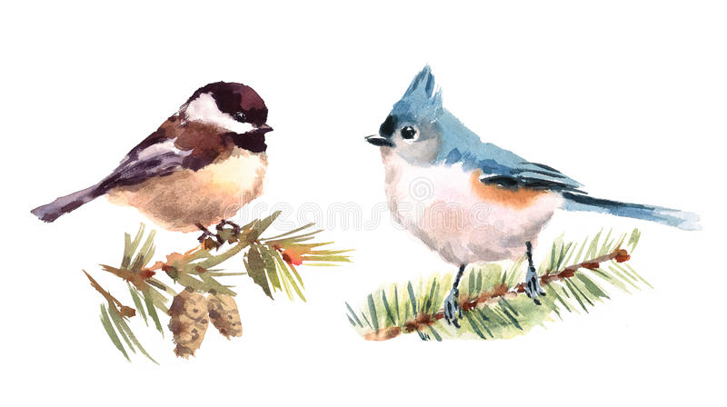 Titmouse and Chickadee Birds Watercolor Illustration Set Hand Drawn. Hand drawn Watercolor illustration Set of Titmouse and Chickadee Birds isolated on white royalty free illustration