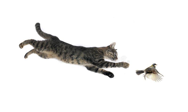 Titmouse e gatto immagine stock