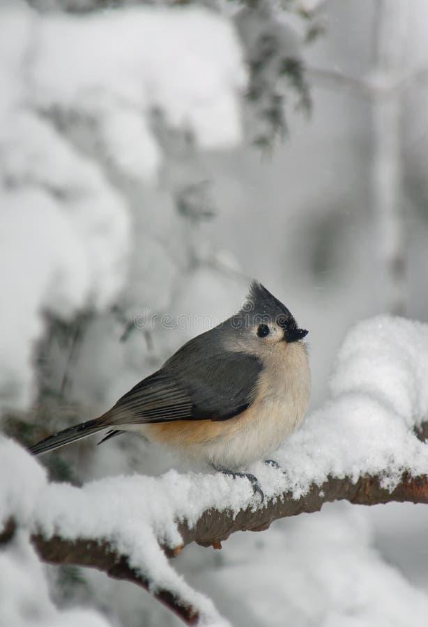 Titmouse e neve adornados imagens de stock
