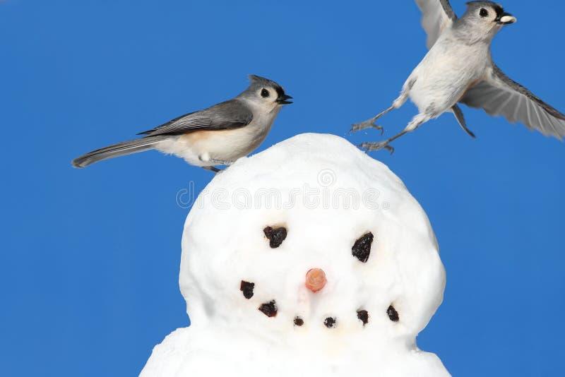 Titmouse en un muñeco de nieve foto de archivo libre de regalías