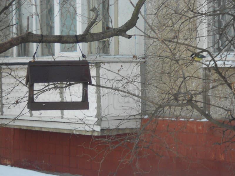 Titmouse perto do alimentador no inverno foto de stock