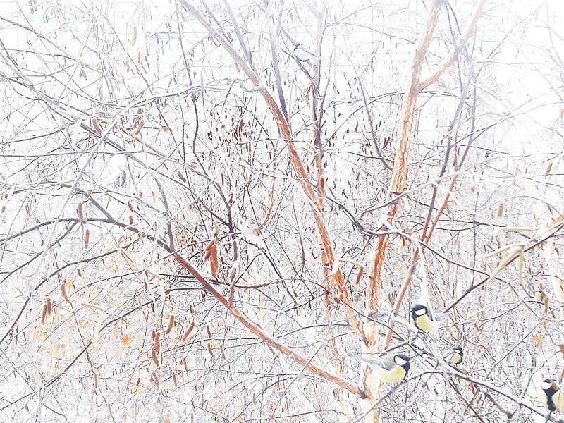 Titmouse w zimie na drzewie przy dozownikiem kwiat czasu zimy śniegu obraz stock