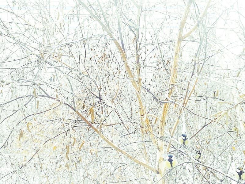 """Titmouse w zimie na drzewie przy dozownikiem Zima czasu â """"– 2 fotografia stock"""