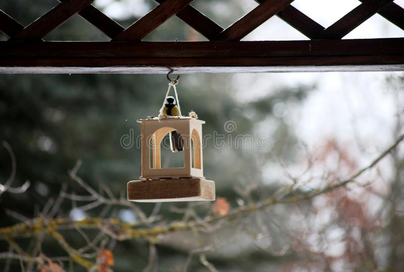 Tit in the bird feeders royalty free stock photos