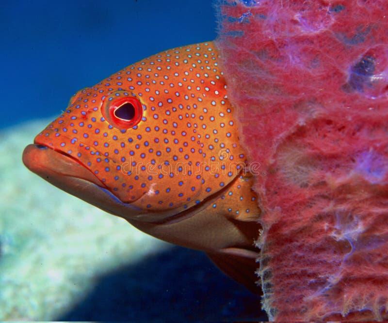 Download Titt för bu n arkivfoto. Bild av foto, fisk, grand, scuba - 28956