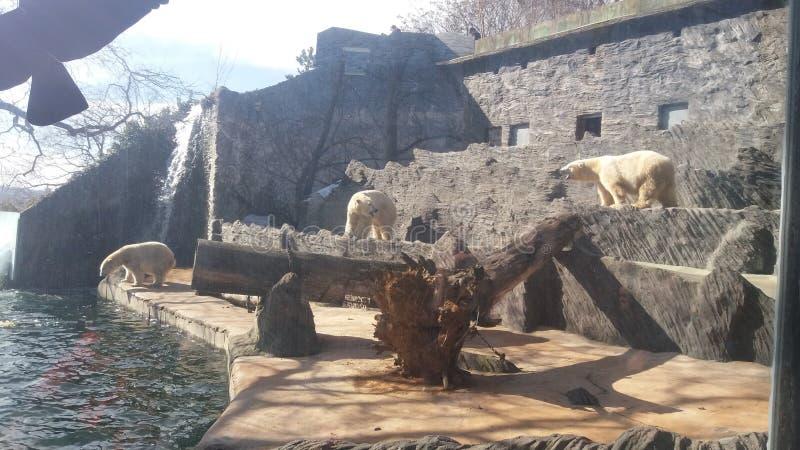Tjeckisk zoo royaltyfri foto