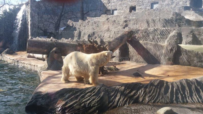 Tjeckisk zoo royaltyfria foton