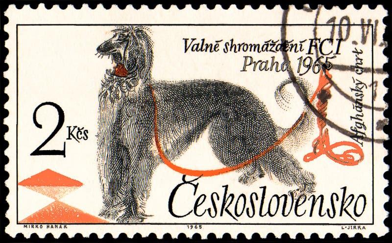 TJECKOSLOVAKIEN - CIRCA 1965: en stämpel som skrivs ut i Tjeckoslovakien, visar en afghansk hund stock illustrationer