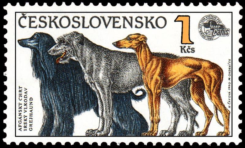 TJECKOSLOVAKIEN - CIRCA 1990: stämpla utskrivavet i Tjeckoslovakien, shower en afghansk hund, den irländska varghunden, vinthunde royaltyfri illustrationer
