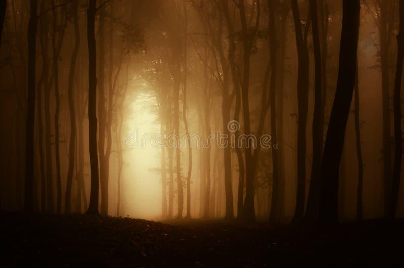 Tjock dimma i en mörk kuslig spöklik skog med dimma i höst royaltyfria bilder