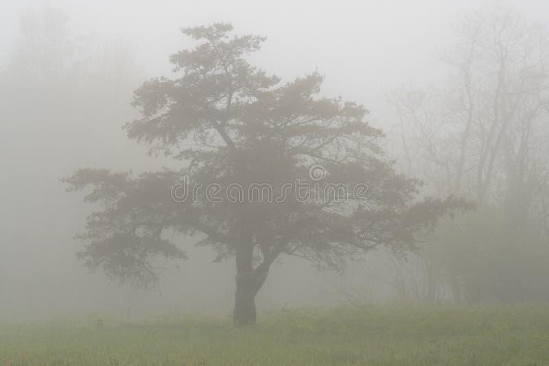 Tjock dimma omger trädet i bergen arkivbilder