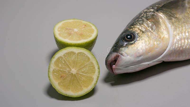 Tjock lipped fisk för grå multefiskar som fångas nytt, med skivade limefrukter royaltyfri foto