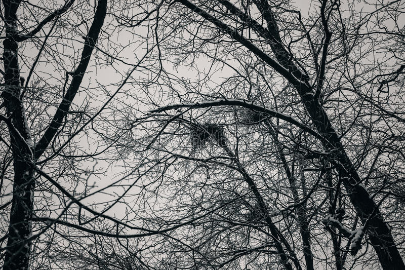 Tjock mörk skog, svarta träd Bakgrundstextur av trädstammar arkivfoton