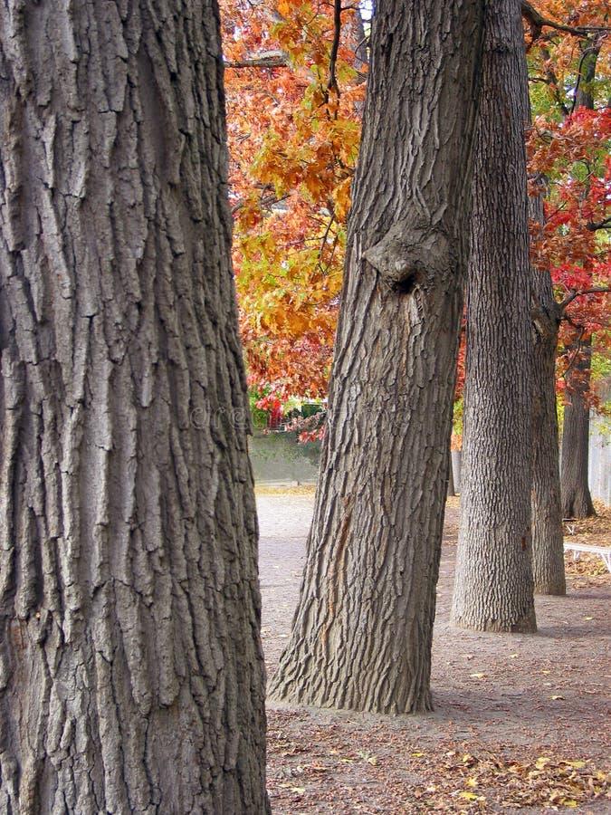 tjocka treestammar för rad royaltyfri fotografi