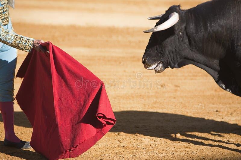 Tjurfäktare med udden i tjurfäktningen royaltyfria bilder