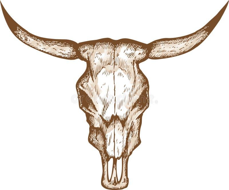Tjurskalle stock illustrationer