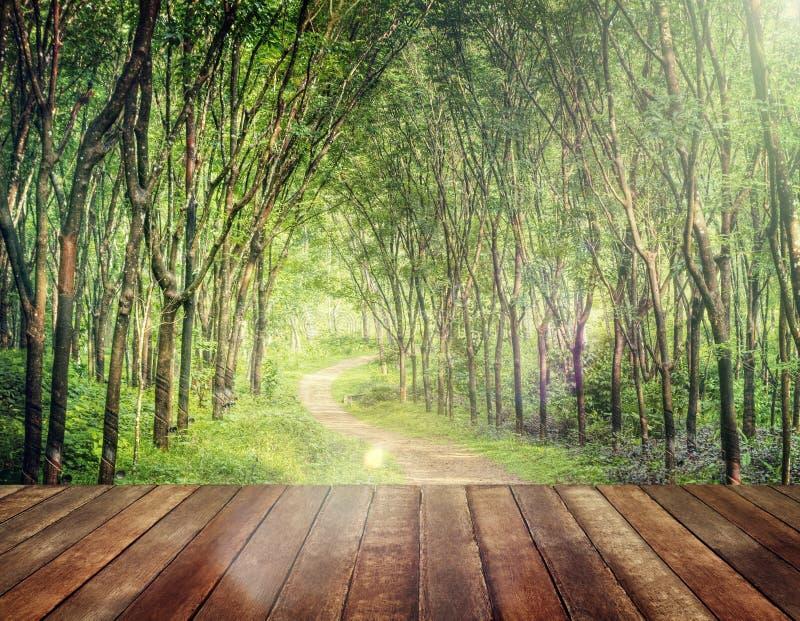 Tjusa Forest Lane i ett gummiträdkolonibegrepp arkivbild