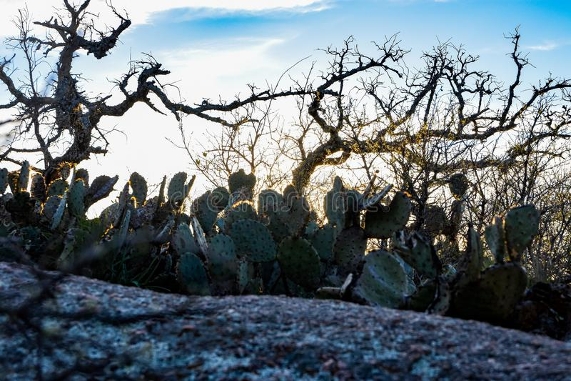 Tjusat vagga kaktuns royaltyfria bilder
